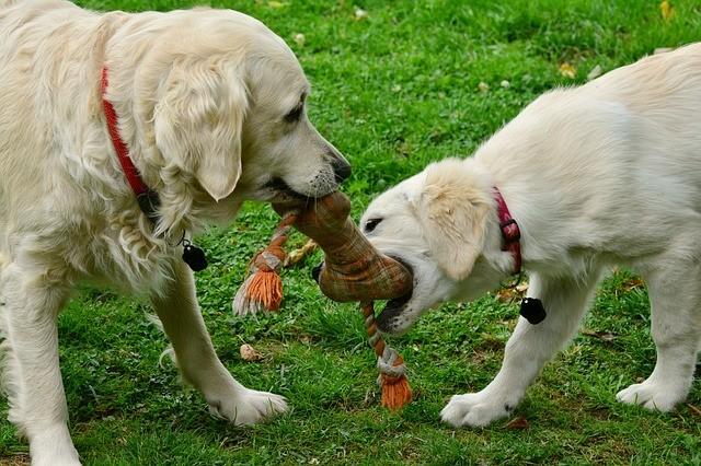 Hundezubehoer auf Rechnung bestellen