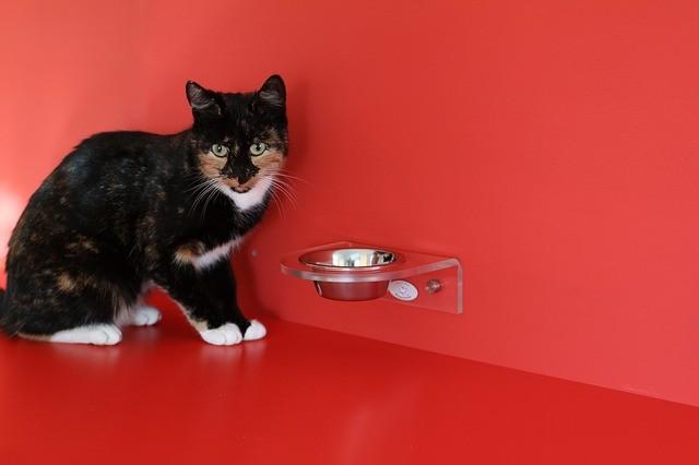 Katzenfutter per Rechnung kaufen