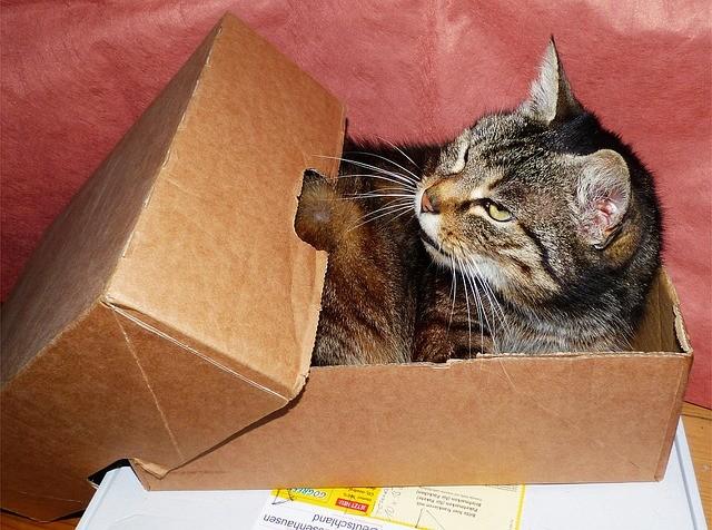 Katzenzubehoer Rechnungskauf
