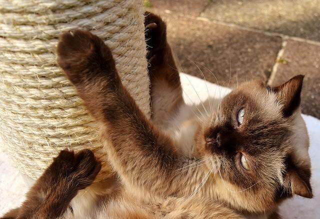 Katzenzubehoer auf Rechnung