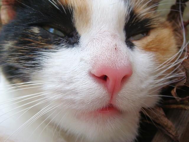Rechnugngskauf Katzenfutter