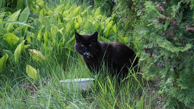 Rechnungskauf Katzenzubehoer