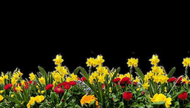 Pflanzen auf Rechnung kaufen